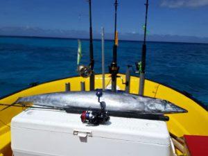 1 wahoo curacao fishing