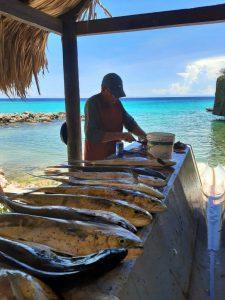 10 mahi mahicuracao fishing