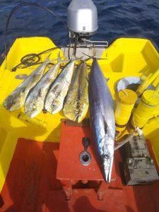 11 mahi mahi curacao fishing