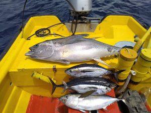 5 tuna curacao fishing