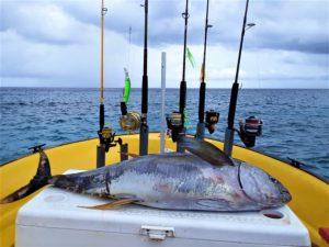 8 tuna curacao fishing