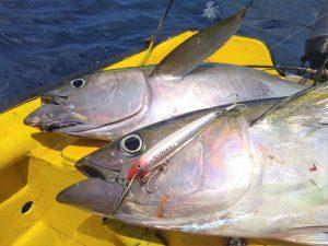 9 tuna curacao fishing
