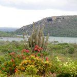 Amazing View Bungalows d